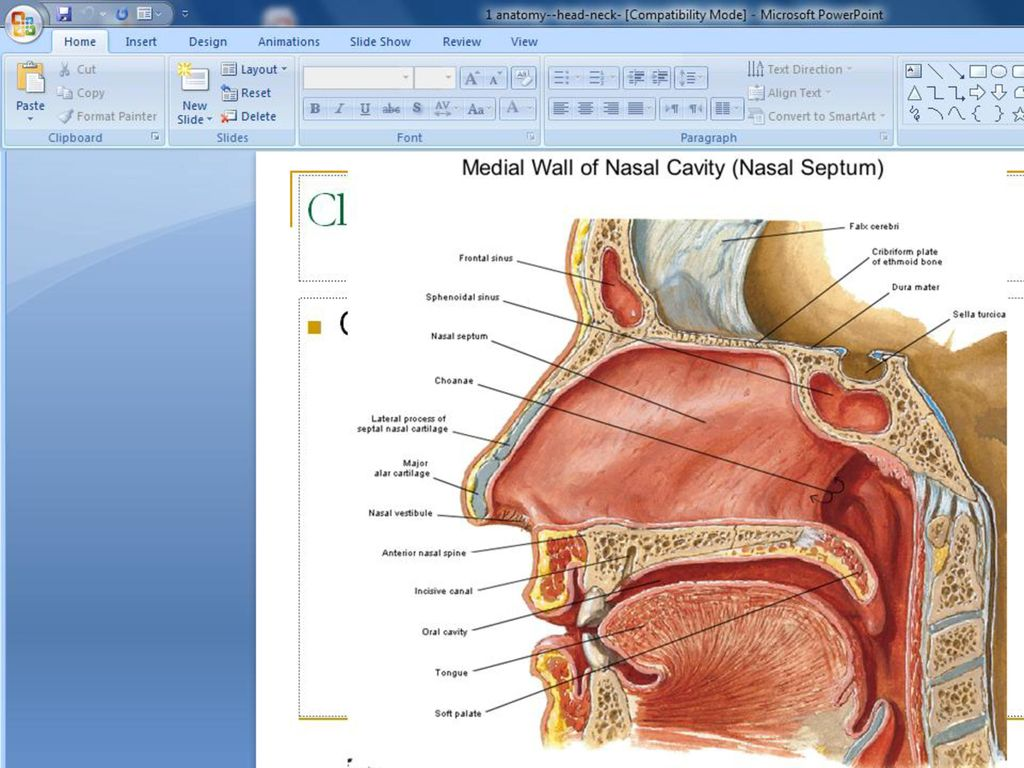 ANATOMY OF NOSE EXTERNAL NOSE - ppt video online download