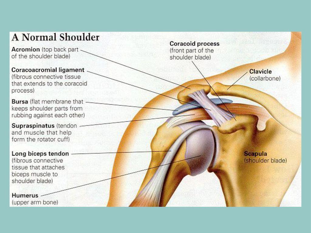 GP PLS Session Shoulder and Elbow - ppt download