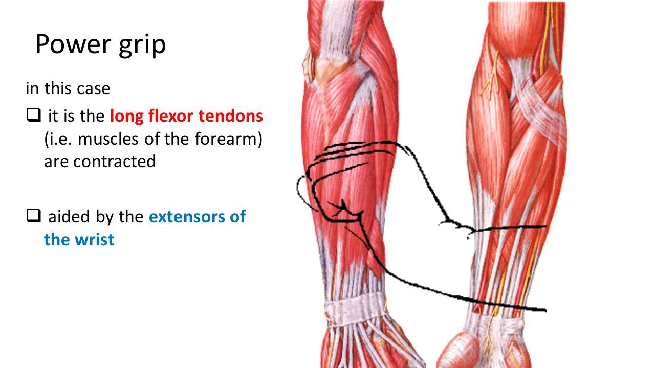 Joints of the Upper Limb. What are the criteria of synovial joint? A ...