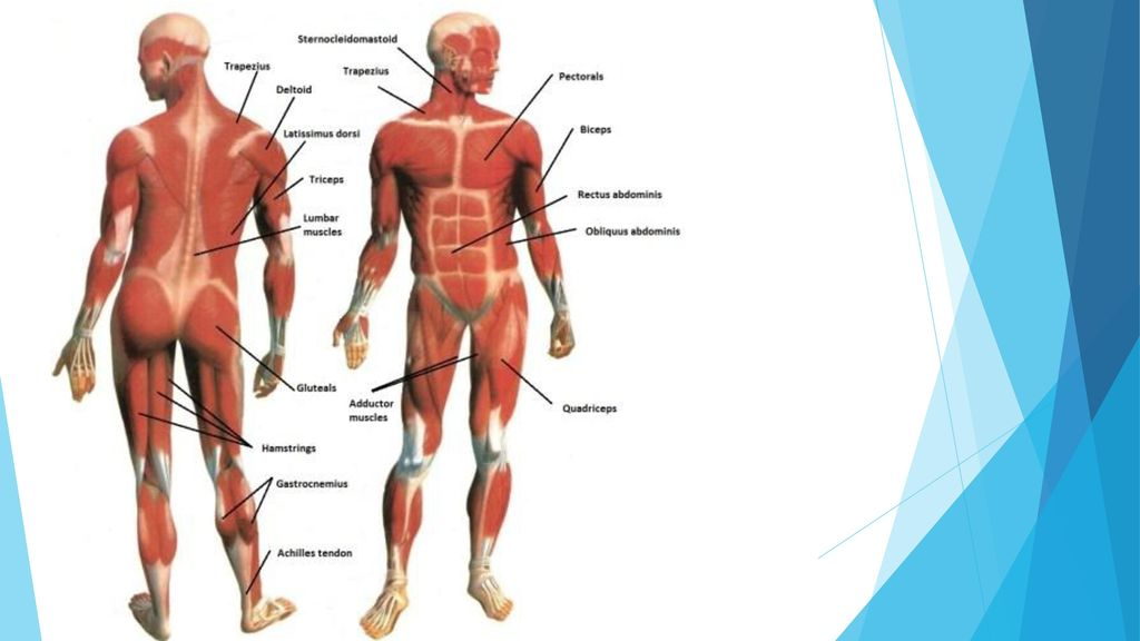 HUMAN BODY SYSTEMS. - ppt download