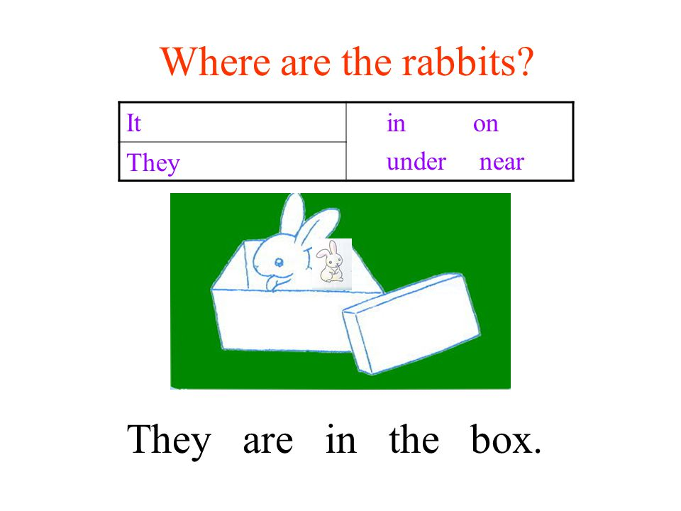 Where are the rabbits It in on under near They They are in the box.