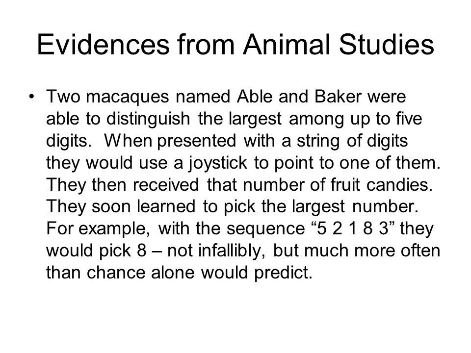 Evidences from Animal Studies Two macaques named Able and Baker were able to distinguish the largest among up to five digits.