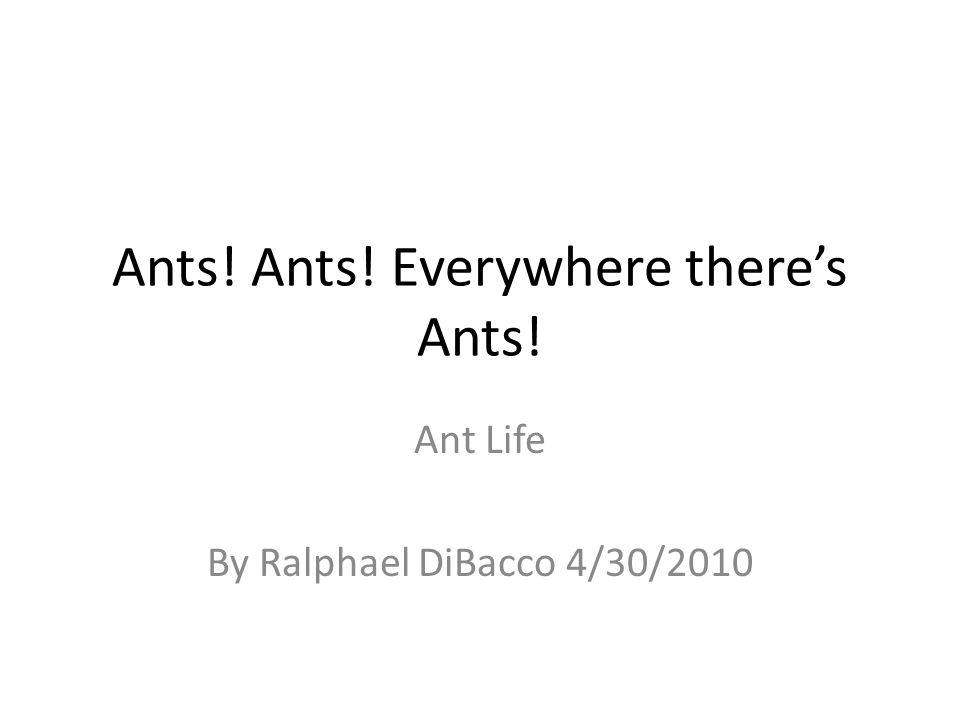 Ants! Ants! Everywhere there's Ants! Ant Life By Ralphael DiBacco 4/30/2010