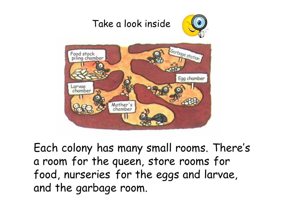 Each colony has many small rooms.