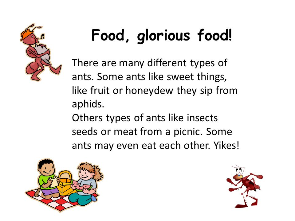 There are many different types of ants.