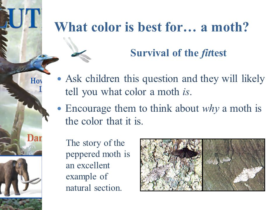 What color is best for… a moth.
