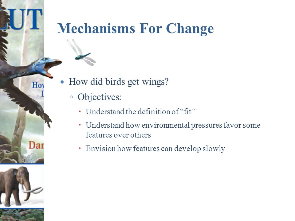 Mechanisms For Change How did birds get wings.