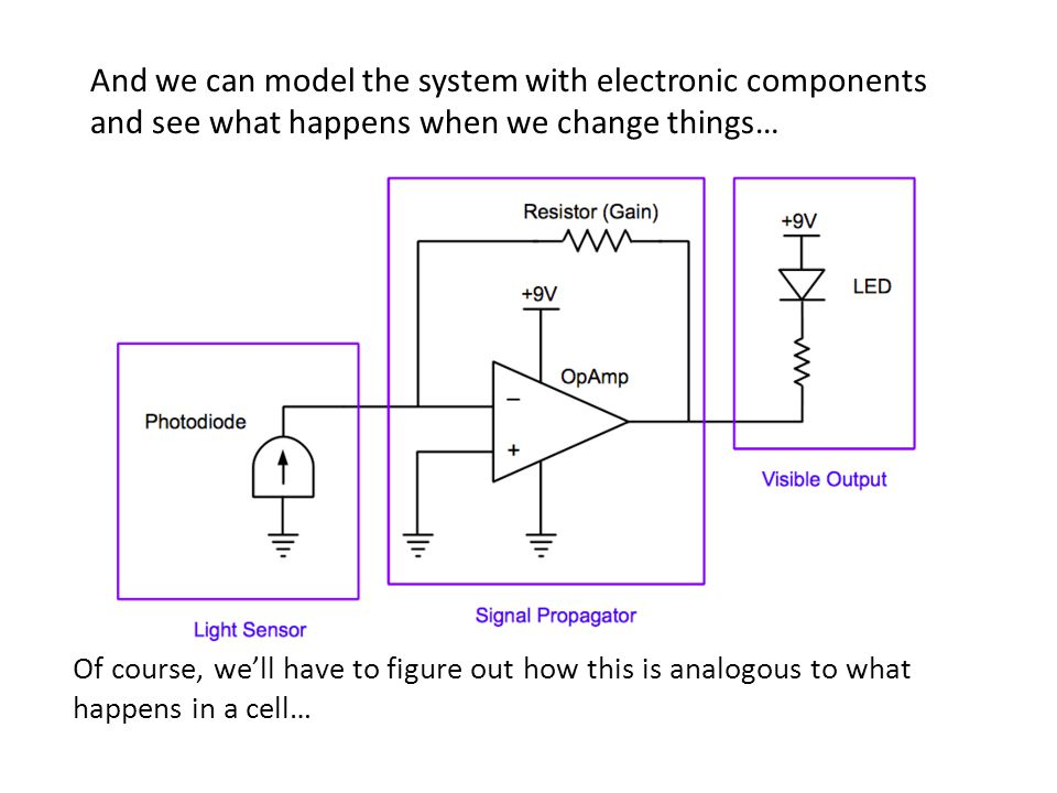 And we can model the system with electronic components and see what happens when we change things… Of course, we'll have to figure out how this is analogous to what happens in a cell…