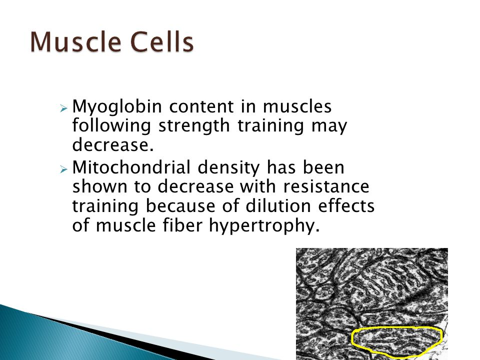  Myoglobin content in muscles following strength training may decrease.