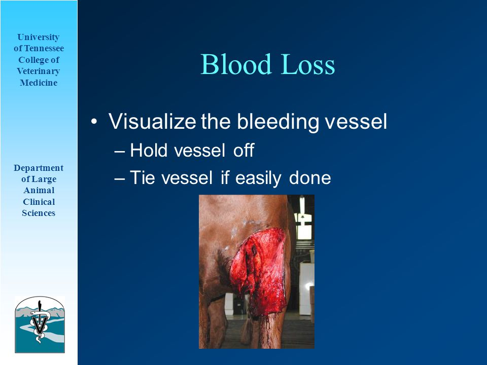 University of Tennessee College of Veterinary Medicine Department of Large Animal Clinical Sciences Blood Loss Visualize the bleeding vessel –Hold vessel off –Tie vessel if easily done