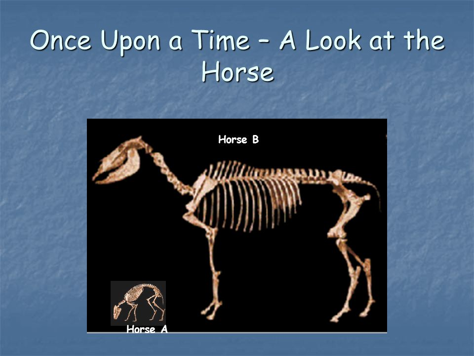 Once Upon a Time – A Look at the Horse Horse A Horse B