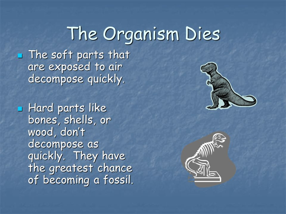 The Organism Dies The soft parts that are exposed to air decompose quickly.