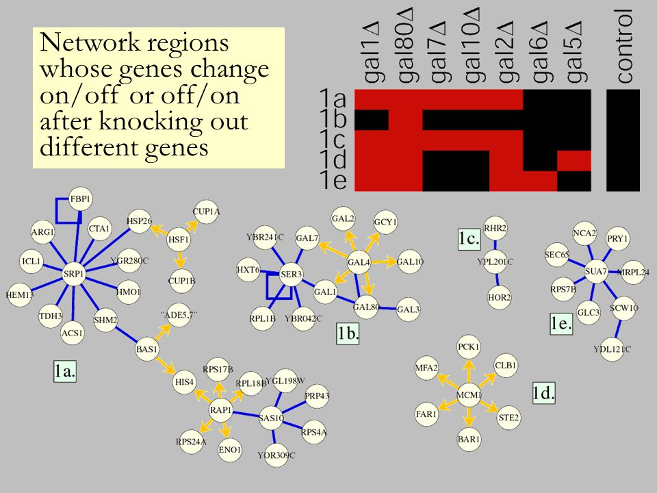 Network regions whose genes change on/off or off/on after knocking out different genes