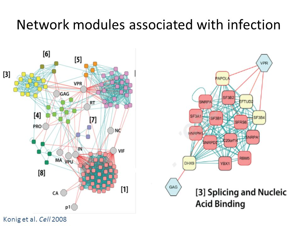 Network modules associated with infection Konig et al. Cell 2008