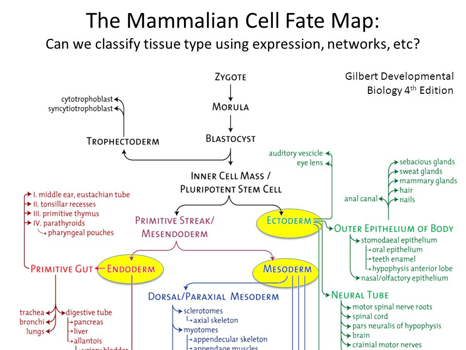 The Mammalian Cell Fate Map: Can we classify tissue type using expression, networks, etc.
