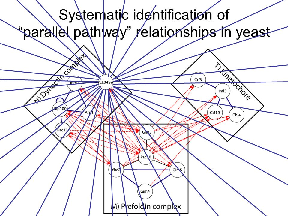Systematic identification of parallel pathway relationships in yeast