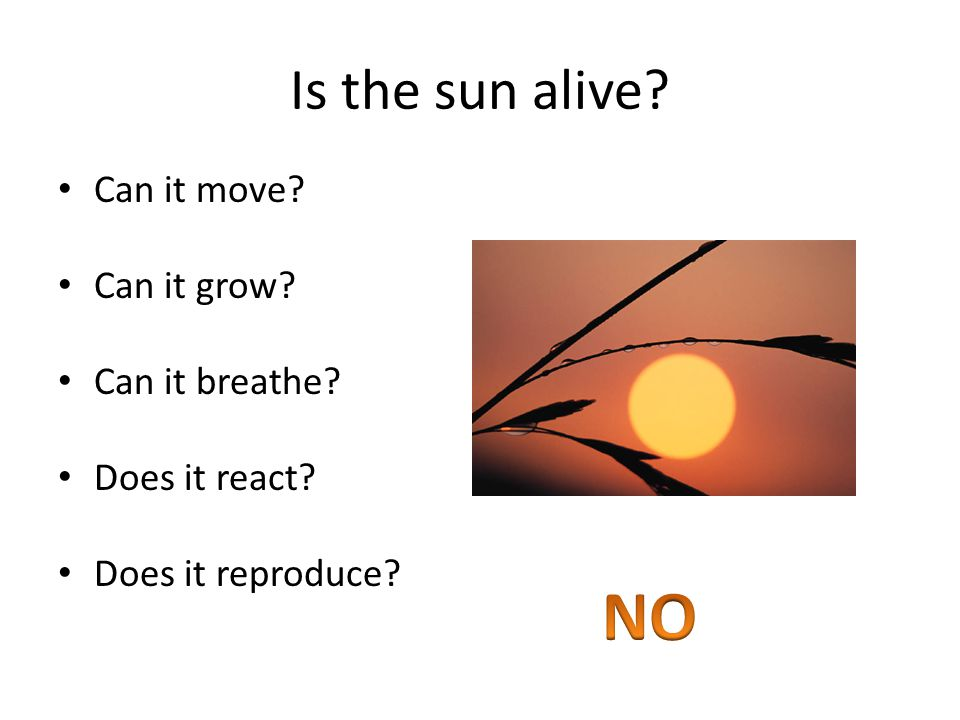 Is the sun alive Can it move Can it grow Can it breathe Does it react Does it reproduce