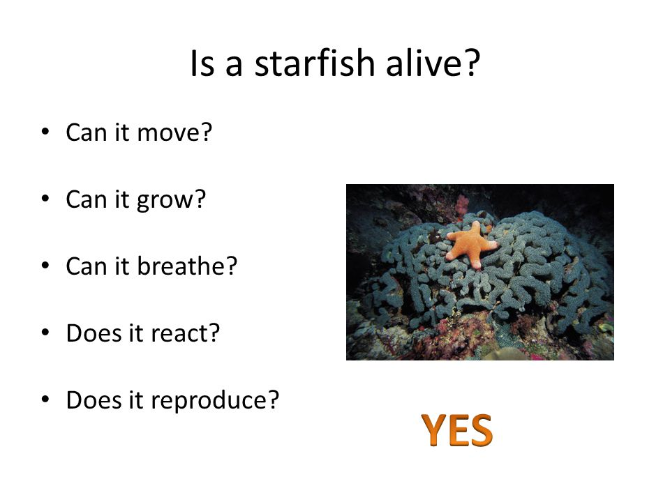 Is a starfish alive Can it move Can it grow Can it breathe Does it react Does it reproduce