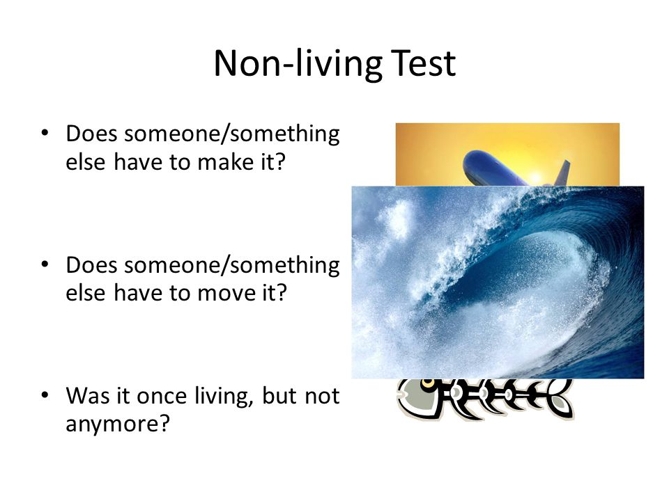 Non-living Test Does someone/something else have to make it.