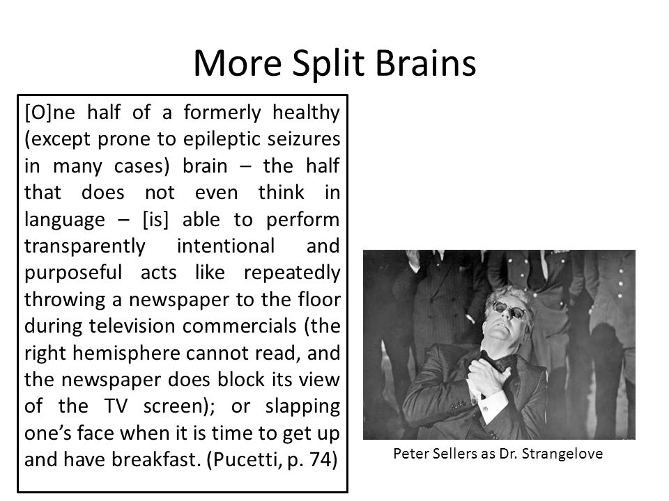 More Split Brains [O]ne half of a formerly healthy (except prone to epileptic seizures in many cases) brain – the half that does not even think in language – [is] able to perform transparently intentional and purposeful acts like repeatedly throwing a newspaper to the floor during television commercials (the right hemisphere cannot read, and the newspaper does block its view of the TV screen); or slapping one's face when it is time to get up and have breakfast.