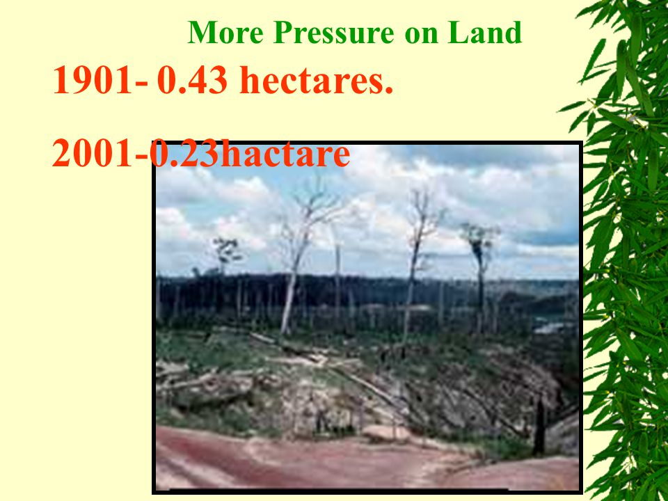 More Pressure on Land 1901- 0.43 hectares. 2001-0.23hactare