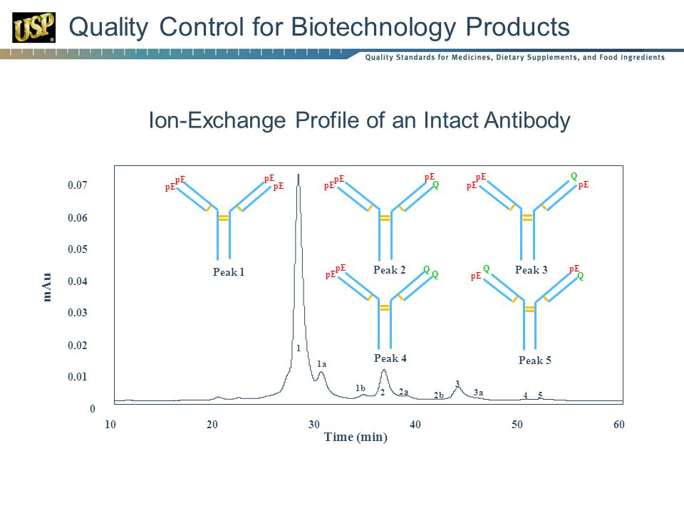 Quality Control for Biotechnology Products 0 0.01 0.02 0.03 0.04 0.05 0.06 0.07 102030405060 mAu Time (min) 2 3 4 1 5 3a 2b 2a 1b 1a pE Peak 1 Q pE Peak 2 QpE Q Peak 4 Q pE Q Peak 5 Q pE Peak 3 pE Ion-Exchange Profile of an Intact Antibody