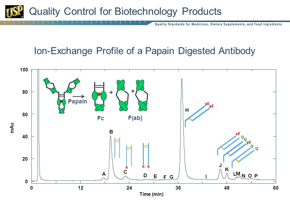 Quality Control for Biotechnology Products 0 20 40 60 80 100 01224364860 mAu Time (min) A B C D F G H I J K L M NO P E Ion-Exchange Profile of a Papain Digested Antibody + + Fc F(ab) Papain