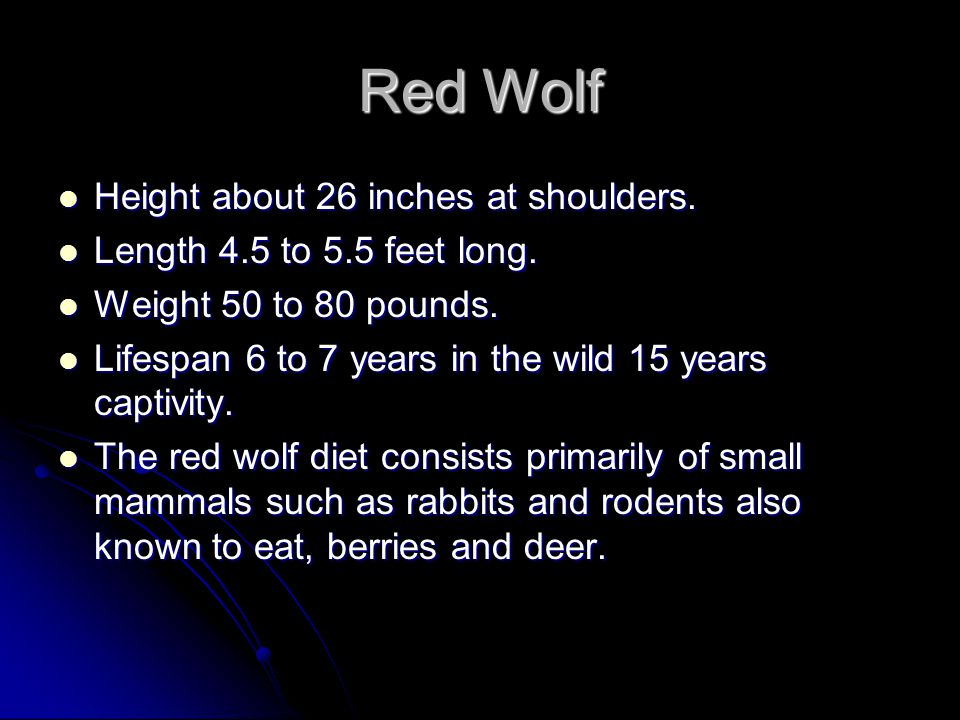 RED WOLF Endangered Animal Report by Jacob and Anthony