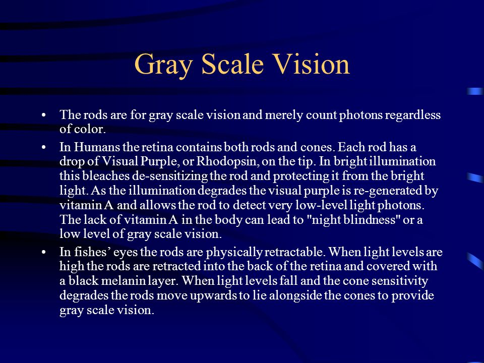 Gray Scale Vision The rods are for gray scale vision and merely count photons regardless of color.