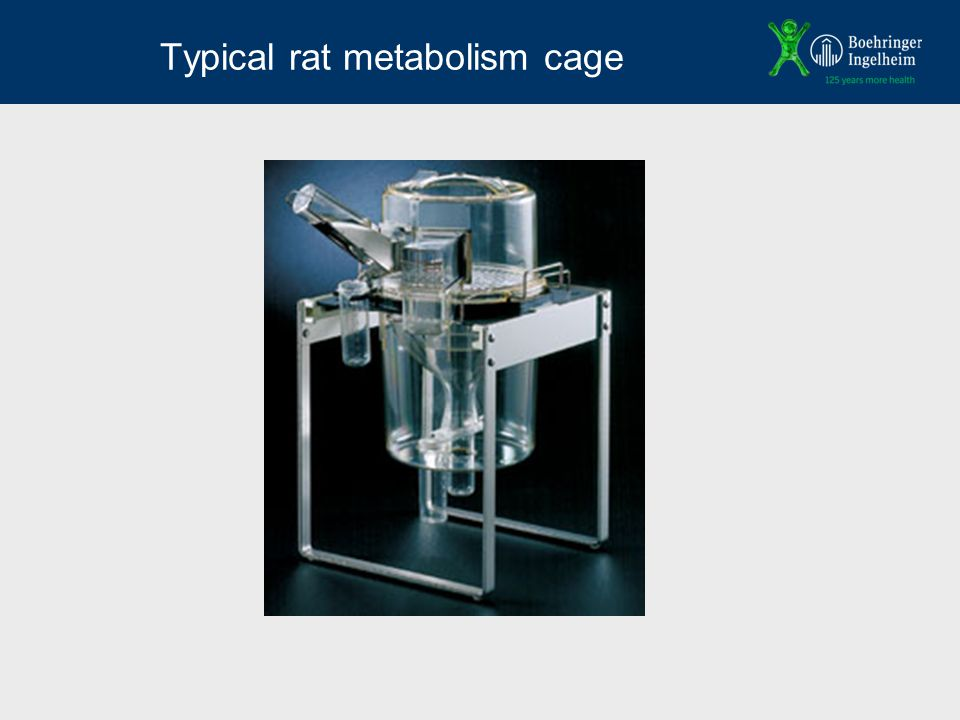 Typical rat metabolism cage