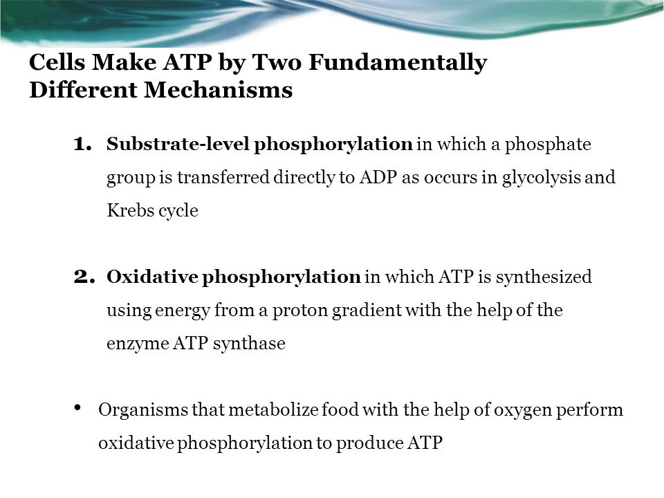 Cells Make ATP by Two Fundamentally Different Mechanisms 1.