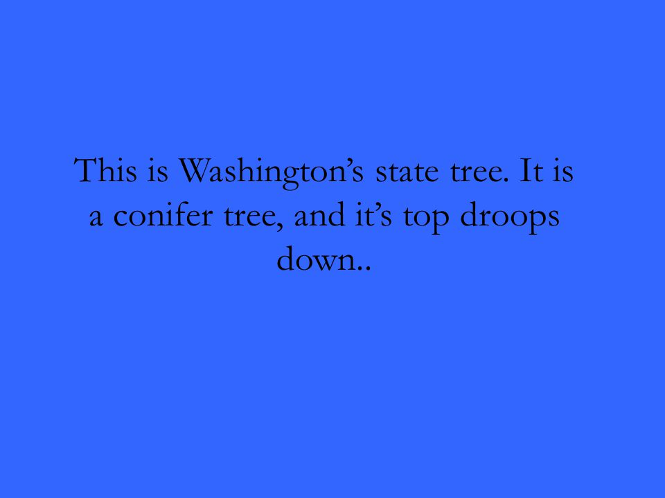 This is Washington's state tree. It is a conifer tree, and it's top droops down..