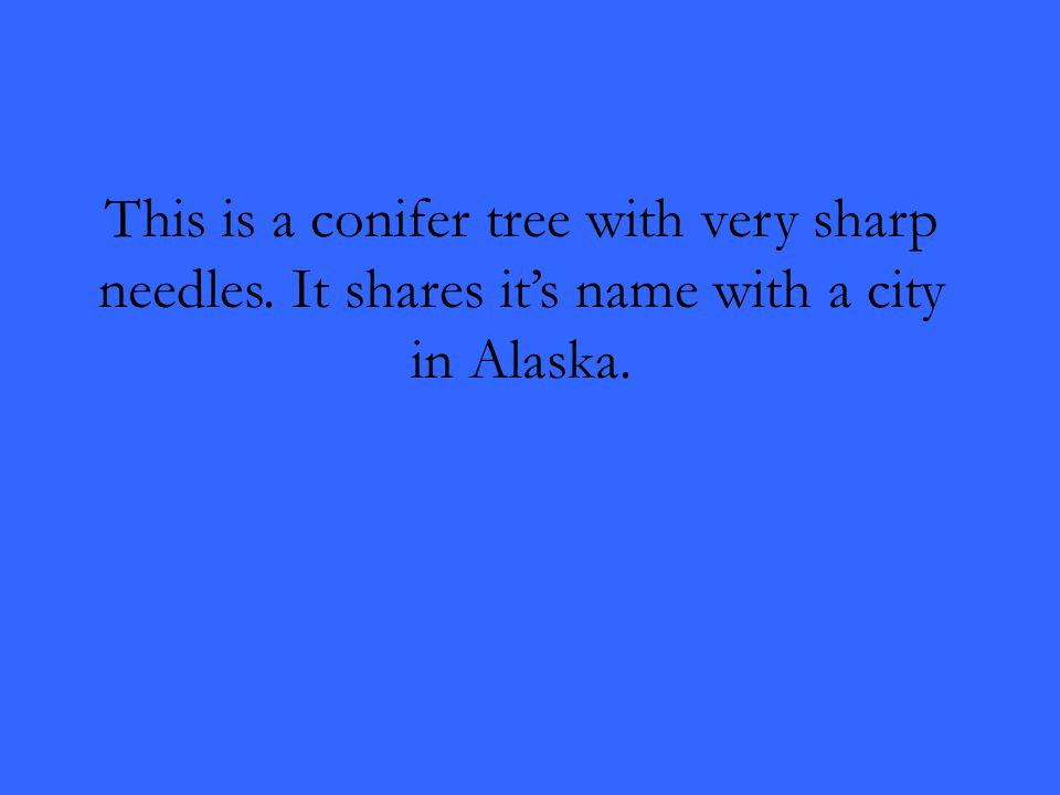 This is a conifer tree with very sharp needles. It shares it's name with a city in Alaska.