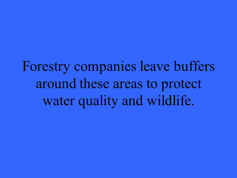 Forestry companies leave buffers around these areas to protect water quality and wildlife.