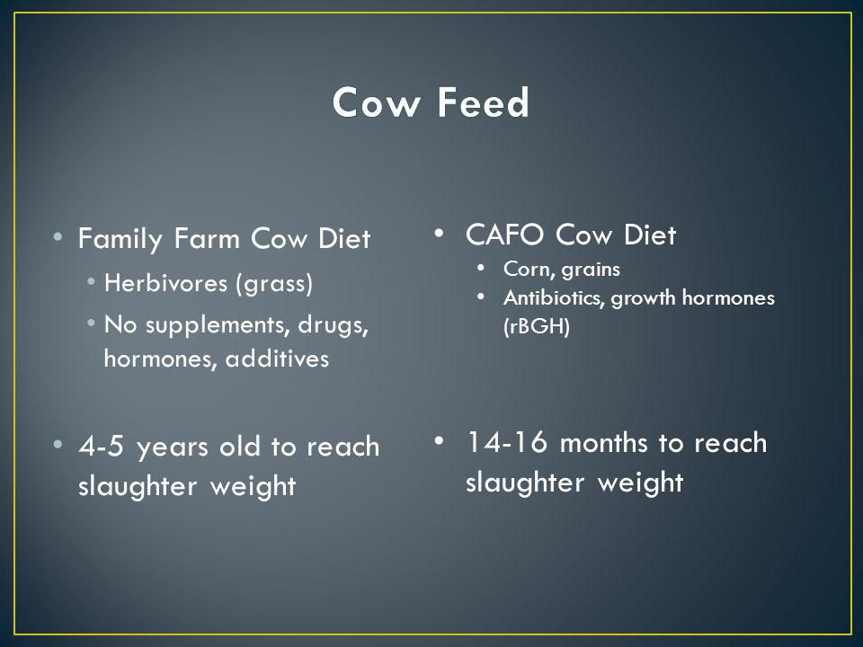 Family Farm Cow Diet Herbivores (grass) No supplements, drugs, hormones, additives 4-5 years old to reach slaughter weight CAFO Cow Diet Corn, grains Antibiotics, growth hormones (rBGH) 14-16 months to reach slaughter weight