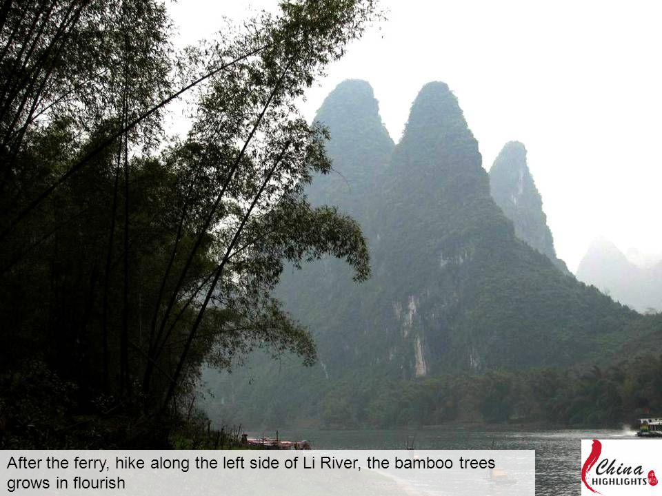 After the ferry, hike along the left side of Li River, the bamboo trees grows in flourish