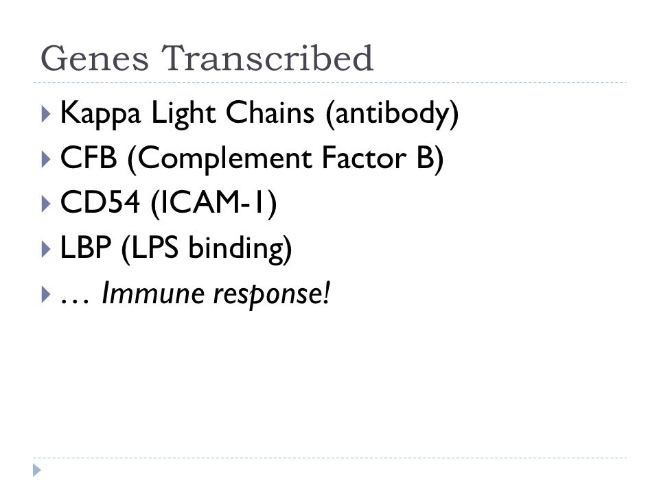 Genes Transcribed  Kappa Light Chains (antibody)  CFB (Complement Factor B)  CD54 (ICAM-1)  LBP (LPS binding)  … Immune response!