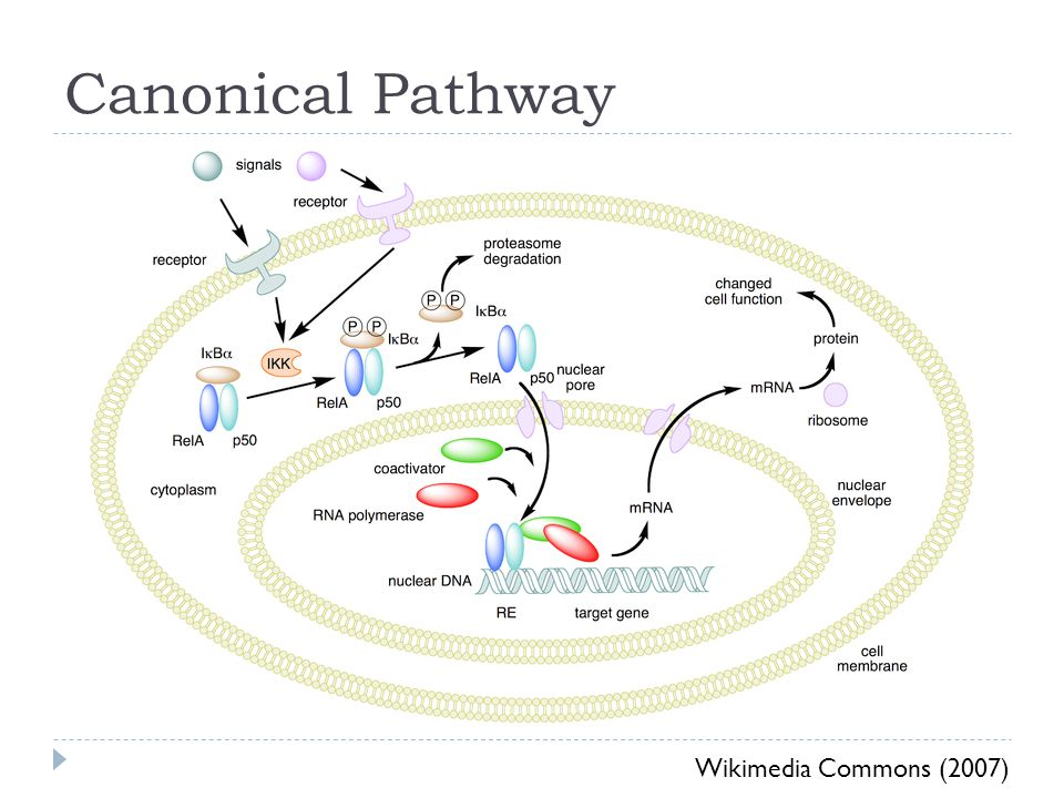 Canonical Pathway Wikimedia Commons (2007)