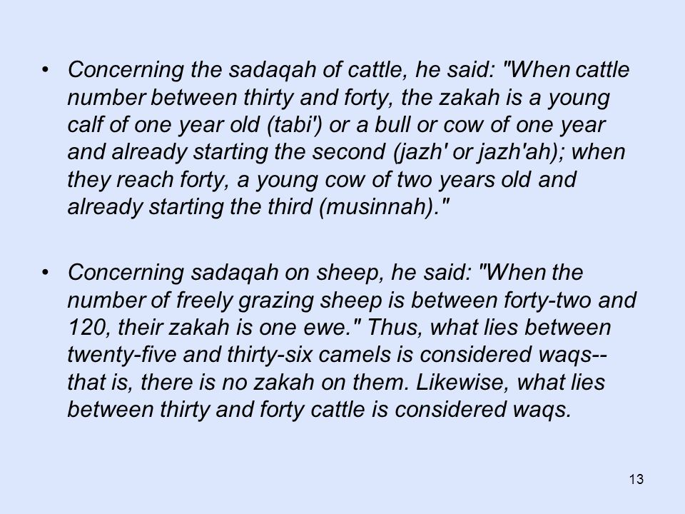 13 Concerning the sadaqah of cattle, he said: When cattle number between thirty and forty, the zakah is a young calf of one year old (tabi ) or a bull or cow of one year and already starting the second (jazh or jazh ah); when they reach forty, a young cow of two years old and already starting the third (musinnah). Concerning sadaqah on sheep, he said: When the number of freely grazing sheep is between forty-two and 120, their zakah is one ewe. Thus, what lies between twenty-five and thirty-six camels is considered waqs-- that is, there is no zakah on them.