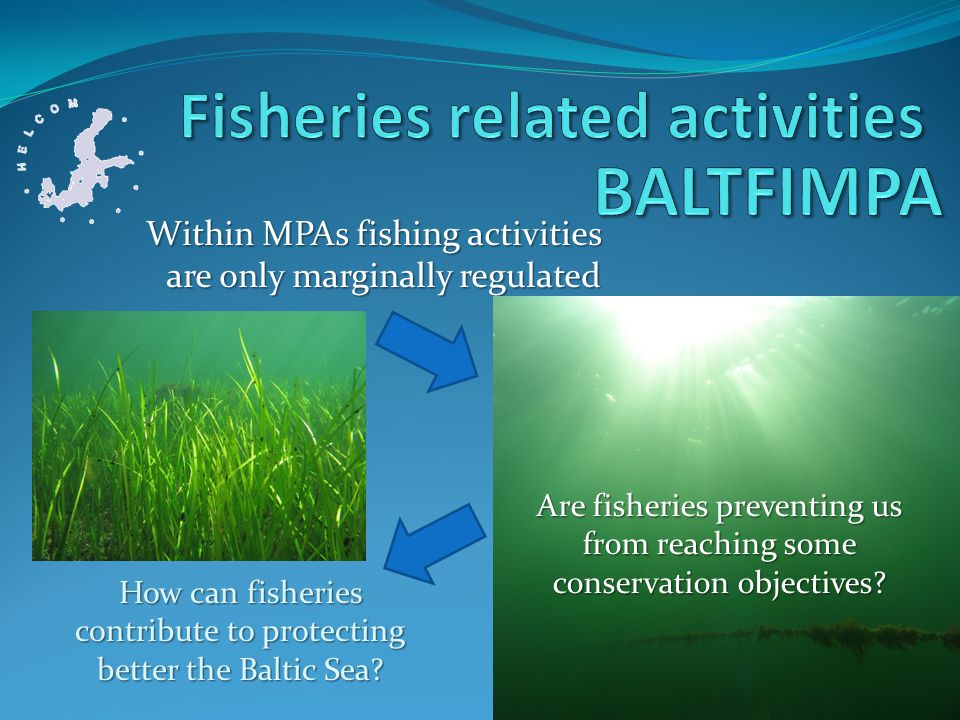 Within MPAs fishing activities are only marginally regulated How can fisheries contribute to protecting better the Baltic Sea.
