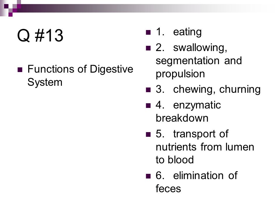 Q #13 Functions of Digestive System 1.eating 2.swallowing, segmentation and propulsion 3.chewing, churning 4.enzymatic breakdown 5.transport of nutrients from lumen to blood 6.elimination of feces