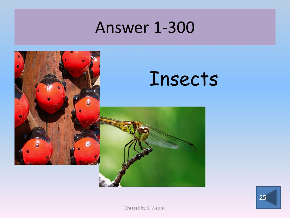 Answer 1-300 25 Insects Created by S. Weider