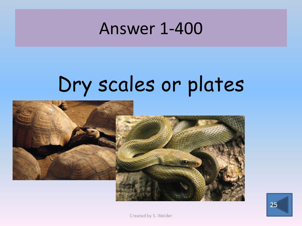Answer 1-400 25 Dry scales or plates Created by S. Weider