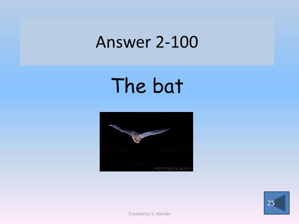 Answer 2-100 25 The bat Created by S. Weider