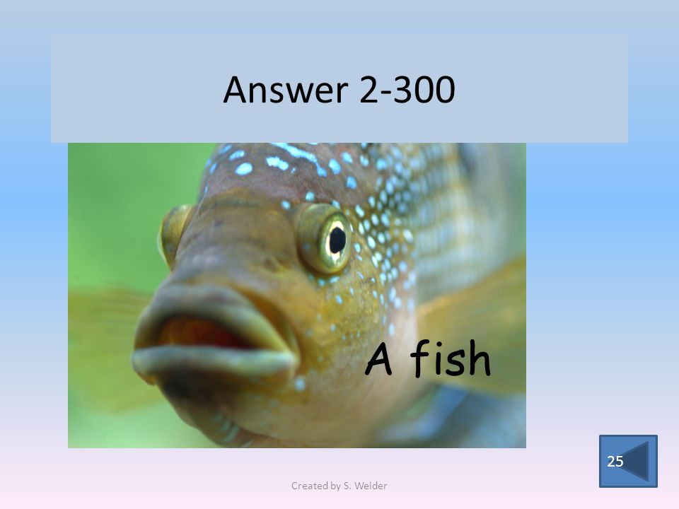 Answer 2-300 25 A fish Created by S. Weider