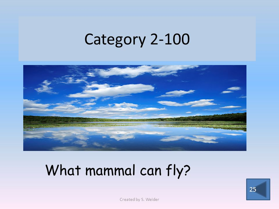 Category 2-100 25 What mammal can fly Created by S. Weider