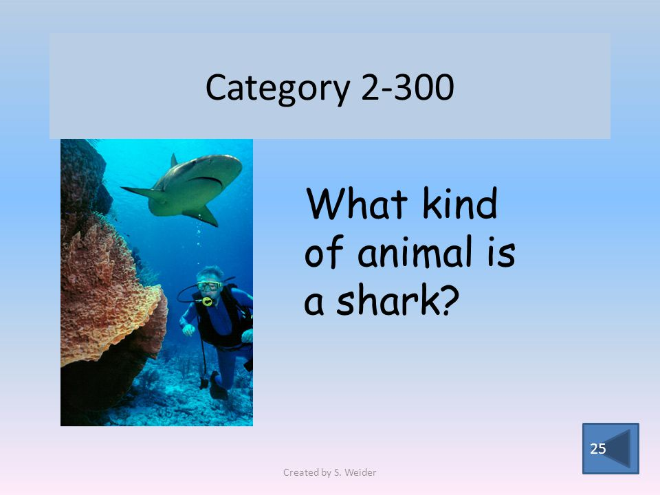 Category 2-300 25 What kind of animal is a shark Created by S. Weider