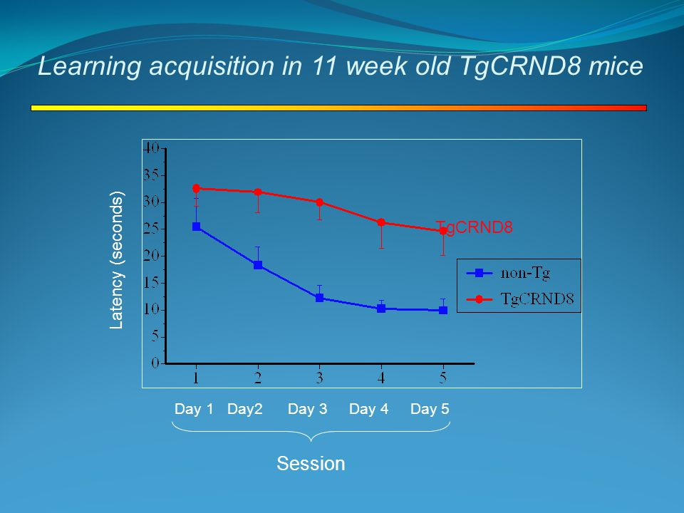 Learning acquisition in 11 week old TgCRND8 mice Latency (seconds) Session Day 1 Day2 Day 3 Day 4 Day 5 TgCRND8