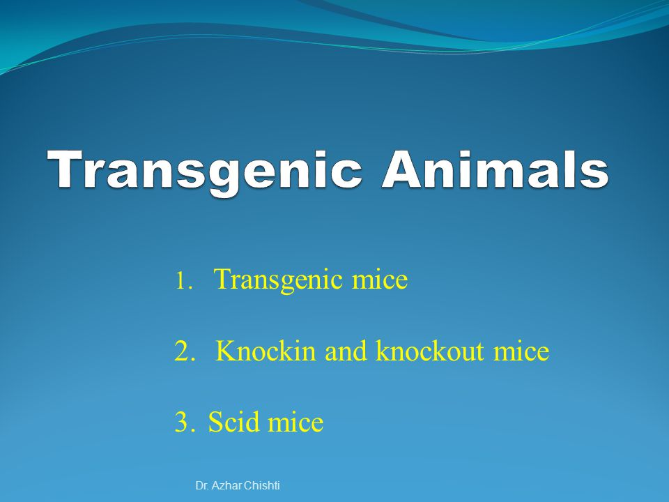 Dr. Azhar Chishti 1. Transgenic mice 2. Knockin and knockout mice 3. Scid mice