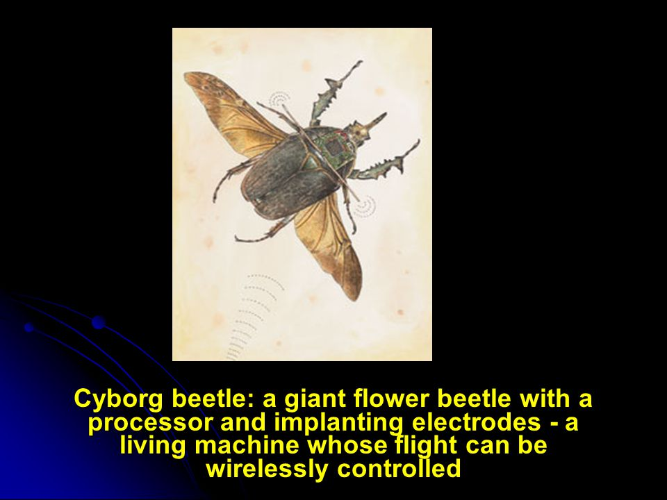 Cyborg beetle: a giant flower beetle with a processor and implanting electrodes - a living machine whose flight can be wirelessly controlled